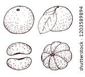 Tangerine Hand Drawn Sketches