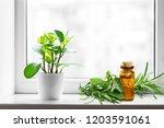 oil bottle and green herbs on... | Shutterstock . vector #1203591061