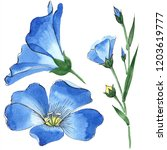 watercolor blue flax flower.... | Shutterstock . vector #1203619777