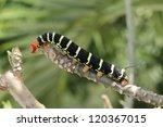 Tetrio Sphinx Caterpillar...