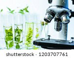 microscope and young plant in... | Shutterstock . vector #1203707761