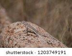 Beautiful Desert Wildlife