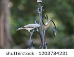 tiny chickadee titmouse... | Shutterstock . vector #1203784231