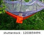 Stock photo cat in hammock outdoor camping 1203854494