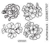 decorative geranium flowers set ... | Shutterstock .eps vector #1203857707