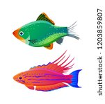 filamented flasher wrasse and... | Shutterstock .eps vector #1203859807