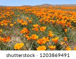 picnic in the poppies | Shutterstock . vector #1203869491