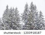 evening snowfall in the...   Shutterstock . vector #1203918187