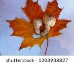 champignon on maple leaf   Shutterstock . vector #1203938827