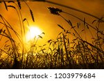 gold ears of wheat with sun.... | Shutterstock . vector #1203979684