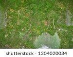 Moss Covered Stone. Beautiful...