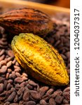 cocoa beans and cocoa pod on a...   Shutterstock . vector #1204037317