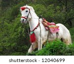 one white horse in forest | Shutterstock . vector #12040699
