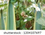 closeup brown orb spider side... | Shutterstock . vector #1204107697