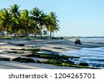 Buggy Tourists Beach Coconut Trees - Fine Art prints