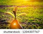 New Born Concept Growing Leaf - Fine Art prints