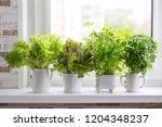 fresh aromatic culinary herbs... | Shutterstock . vector #1204348237