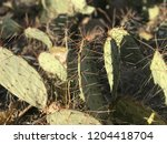 prickly pear paddles | Shutterstock . vector #1204418704
