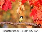 beautiful little bird titmouse... | Shutterstock . vector #1204427764