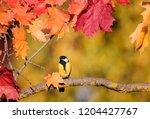 beautiful little bird titmouse... | Shutterstock . vector #1204427767