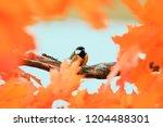 little beautiful bird tit... | Shutterstock . vector #1204488301