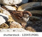 close up of a sparrow | Shutterstock . vector #1204519081