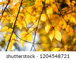 yellow foliage. fall has come.... | Shutterstock . vector #1204548721