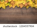 colorful autumn leaves on brown ...   Shutterstock . vector #1204557904