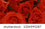 valentine's day roses close up. | Shutterstock . vector #1204595287