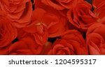 valentine's day roses close up. | Shutterstock . vector #1204595317
