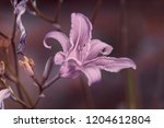 bud lily in the evening garden  ... | Shutterstock . vector #1204612804