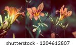 lily flowers in the garden... | Shutterstock . vector #1204612807