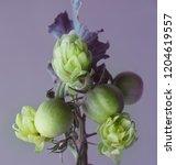 abstract bouquet of green... | Shutterstock . vector #1204619557