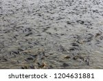 many of the fish pond | Shutterstock . vector #1204631881