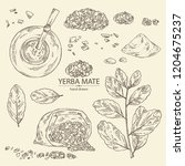 collection of yerba mate  drink ... | Shutterstock .eps vector #1204675237