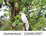 beautiful white parrots ... | Shutterstock . vector #1204813507