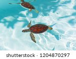 baby turtle in the water  mexico | Shutterstock . vector #1204870297