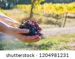 female winemaker is holding... | Shutterstock . vector #1204981231