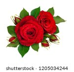 floral composition with red... | Shutterstock . vector #1205034244