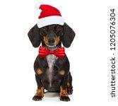 Funny Dachshund Sausage  Santa...