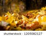 fallen leaves in the forest | Shutterstock . vector #1205082127