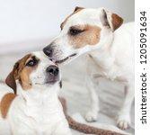 dog licking dog. pets love | Shutterstock . vector #1205091634