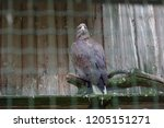 eagle in the zoo  | Shutterstock . vector #1205151271