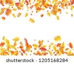oak  maple  wild ash rowan... | Shutterstock .eps vector #1205168284