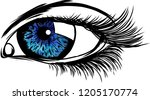 vector illustration beautiful... | Shutterstock .eps vector #1205170774