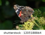 close up of the left side of a... | Shutterstock . vector #1205188864