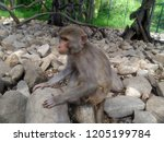 the monkey is sitting on the... | Shutterstock . vector #1205199784