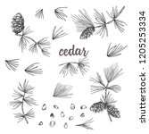 set ink sketch of cedar... | Shutterstock .eps vector #1205253334
