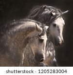 two stallions together | Shutterstock . vector #1205283004