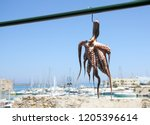traditional greek sea food ... | Shutterstock . vector #1205396614